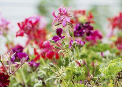 Blumenpracht-am-Berghof